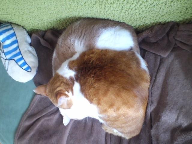 まじり猫 茶白2匹編