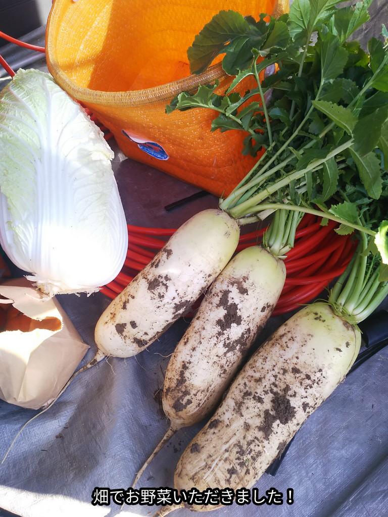 畑でお野菜いただきました!