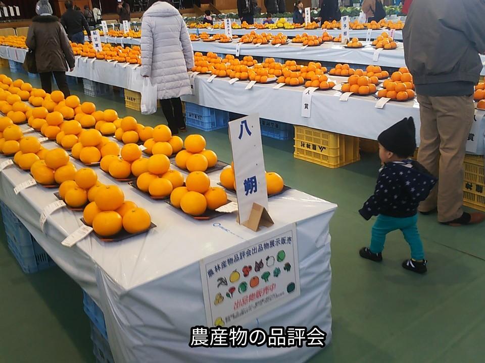 農産物の品評会