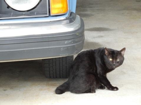 通りすがりに見かけた猫(776)