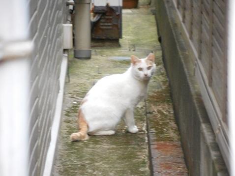 通りすがりに見かけた猫(778)