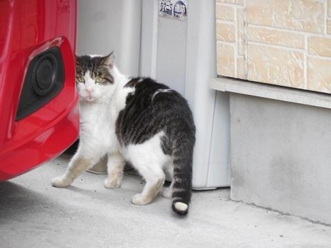 通りすがりに見かけた猫(780)