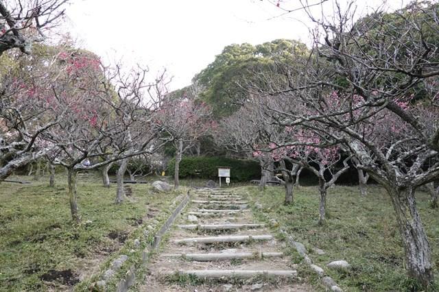20190224 保久良神社(梅林) (62)