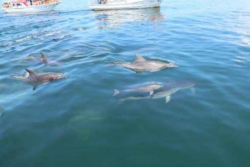 Dolphin7878.jpg