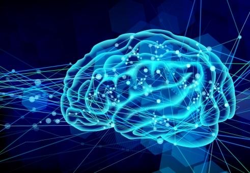 brain538768.jpg