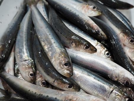 sardine7878.jpg