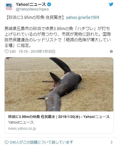 【深海生物】長崎県の五島市の砂浜にとても珍しい「ハチワレ」というサメが打ち上げられる…鳥取の漁港では「巨大なダイオウイカ」を発見!