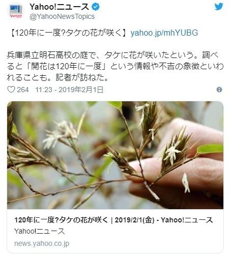 【兵庫】120年に1度だけ咲くと言われている「竹の花」が開花…謎が多く凶兆の象徴