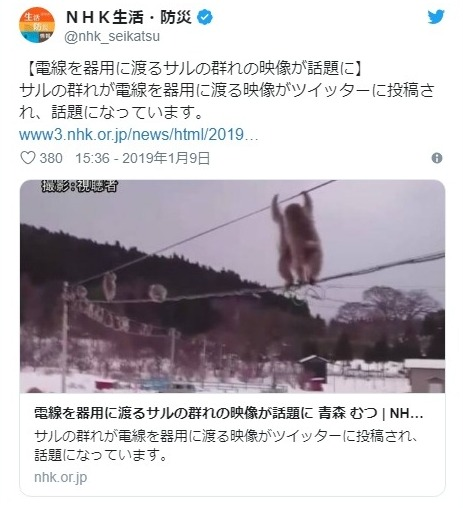 【綱渡り】青森県で電線を渡る「サル」の群れが話題に…地元住民「これほど大量のサルを一度に見たのは初めて」