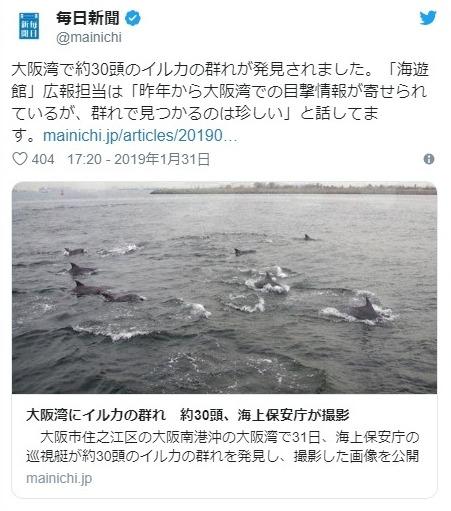 大阪湾に「イルカ」の群れが出現!約30頭ほどが泳いでいるのを発見…神戸方面へ向っている模様