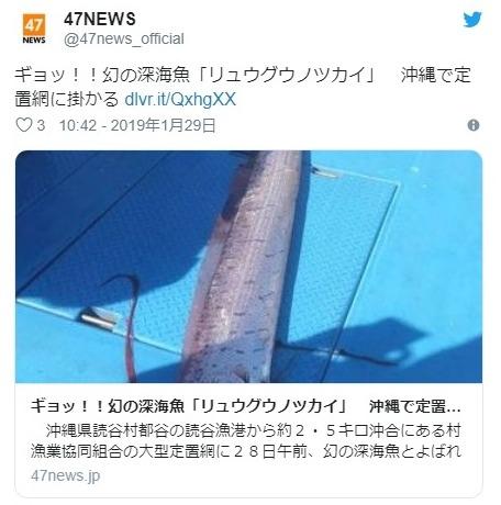【深海魚】沖縄で巨大な「リュウグウノツカイ」が見つかる!昨年末、神奈川の江ノ島でも見つかっていた模様