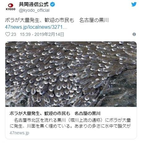 【愛知】名古屋の黒川に「ボラ」が大量発生!川を埋め尽くすほどの数に...