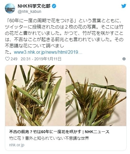 【滋賀県】不吉の前兆とされる「60年に1度」の周期で咲く「竹の花」が開花