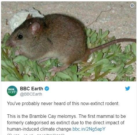 地球温暖化の影響により、オーストラリアで「哺乳類」が初めて絶滅…ネズミの仲間「ブランブル・ケイ・メロミス」