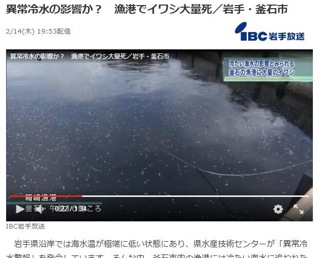 【岩手】漁港に大量の「イワシ」が押し寄せる…海水温が極端に低くなったための異常冷水のためか?