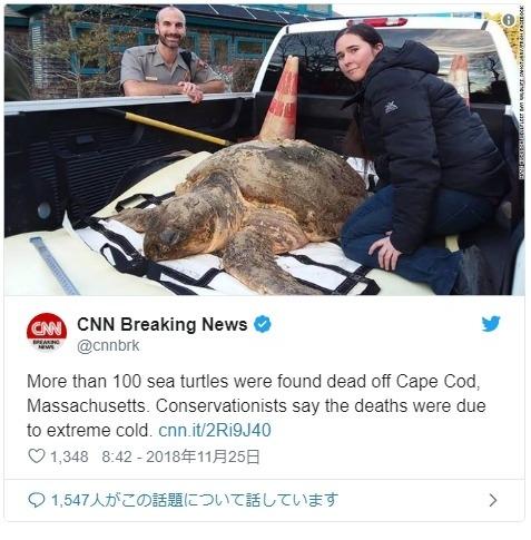 【寒波】アメリカ・マサチューセッツ州であまりの寒さに「ウミガメ173匹」が凍死する事態に