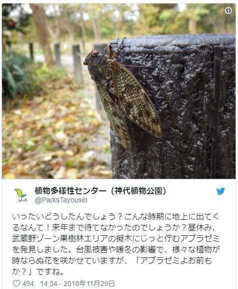 【異常】もう冬なのにここ数日の暑さにより、東京都内で「セミ」が羽化…公園職員も驚き