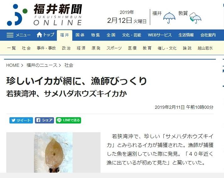 【深海】福井県、若狭湾で珍しいイカ「サメハダホウズキイカ」を捕獲、漁師もびっくり…高知県の土佐清水港ではクジラ2頭が出現