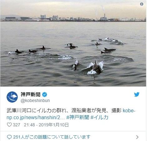 【稀少】兵庫県武庫川の河口に「イルカ」約10頭が泳いでいるのが目撃される…水族園飼育員「陸に近い場所で泳いでいるのは非常に珍しい」