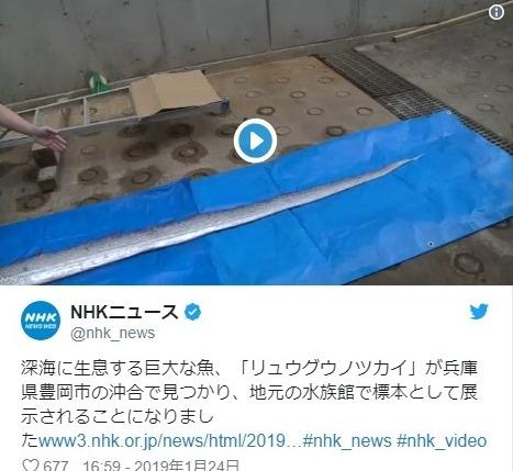 【関西】兵庫県の豊岡市沖合で「巨大なリュウグウノツカイ」が見つかる!
