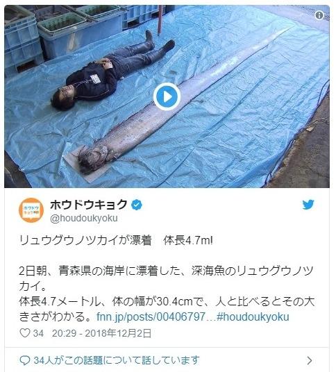 【前兆】2日、青森県と新潟県で深海魚「リュウグウノツカイ」が見つかる…先月下旬に駿河湾で深海魚が相次いで目撃されていたのと関連は?