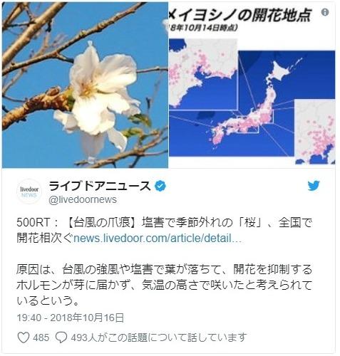【異変】全国各地で季節外れの「桜」の開花報告が相次ぐ