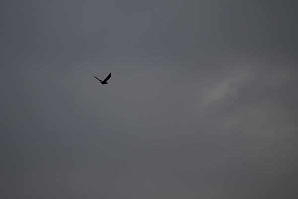 鳥風景10