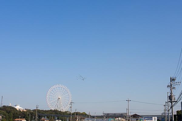 観覧車と鳥の群れ