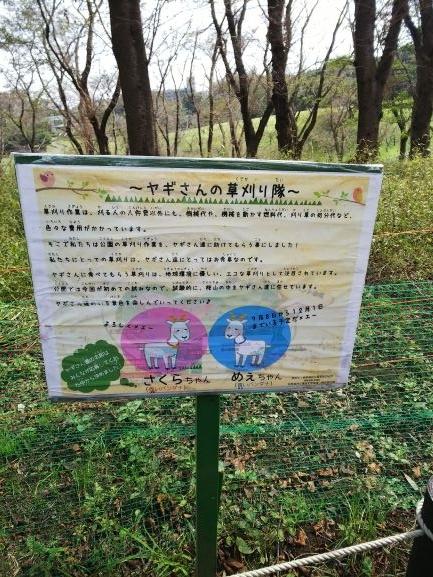 DSC_0065 (1)