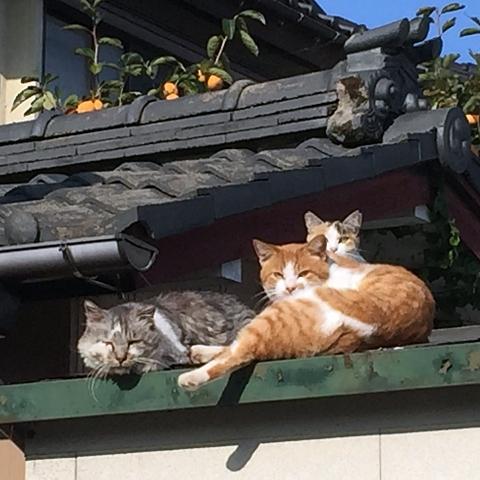 近所の野良