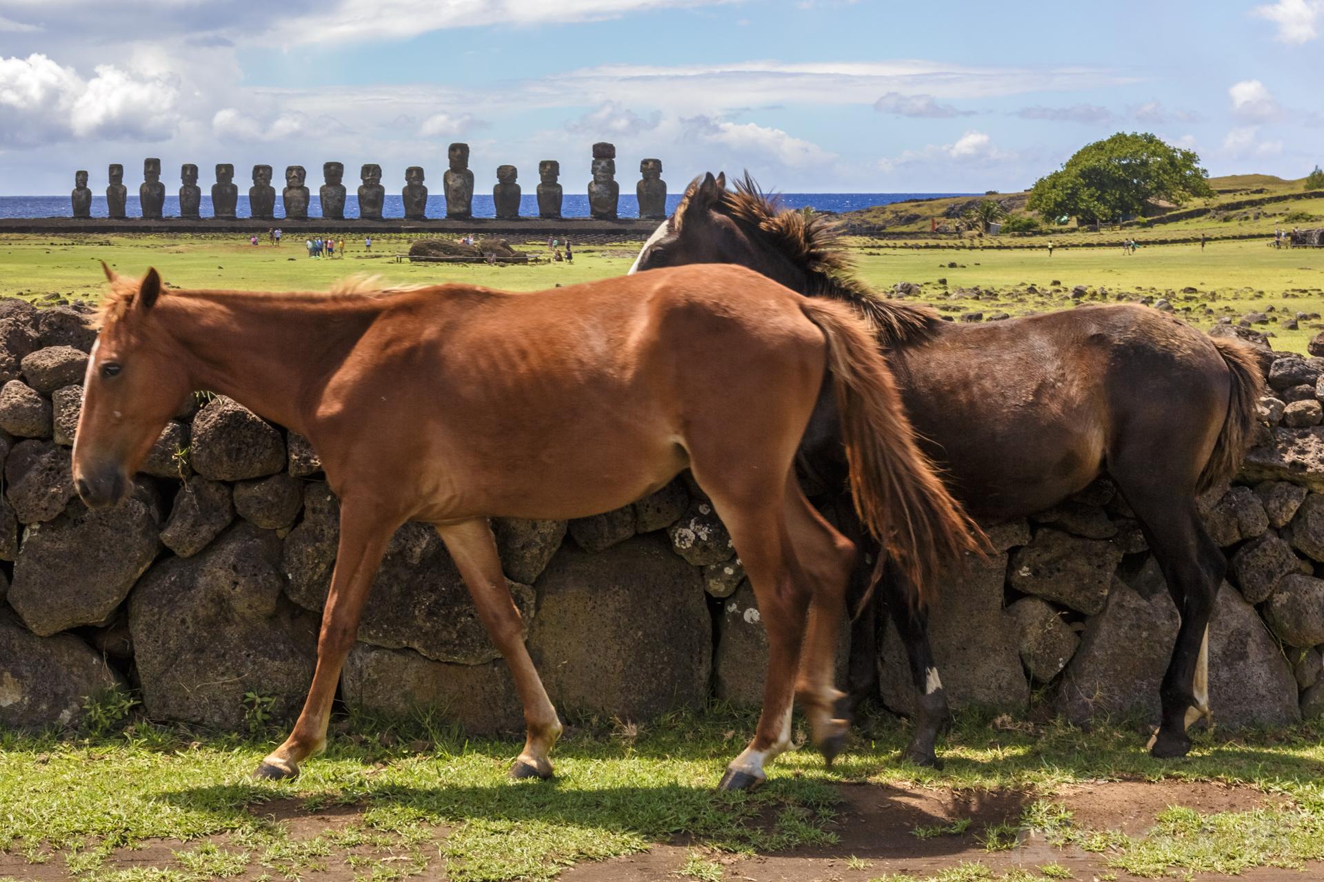 caballo127.jpg