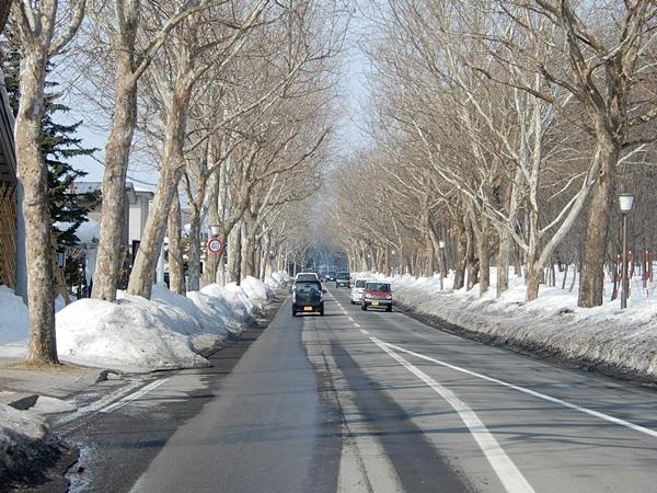 プラタナス街道