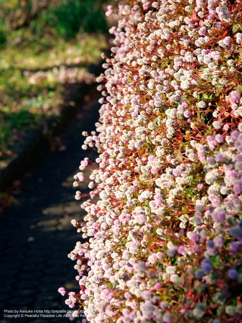 壁面に咲くかわいらしい花