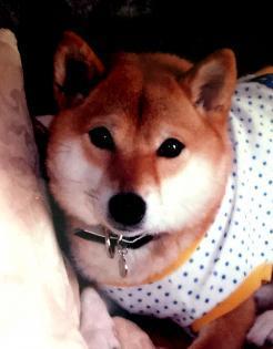 庭野ルルちゃん_new_convert_20181029153439 (1)
