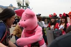 20181016 pig 001