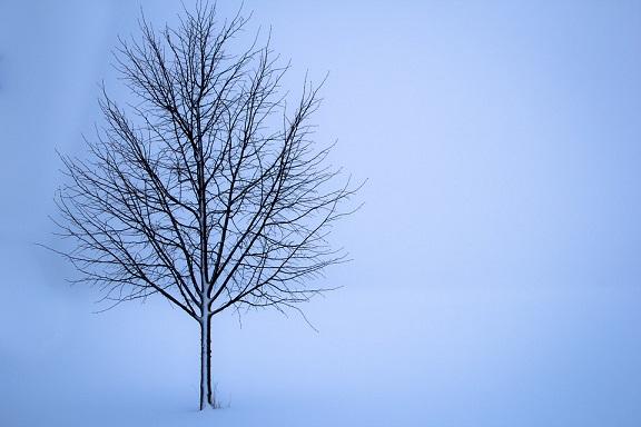 tree-1056598_960_720.jpg