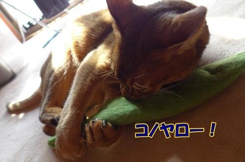 0224konoyaro.jpg