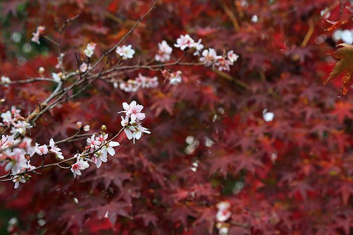 水景園 紅葉4