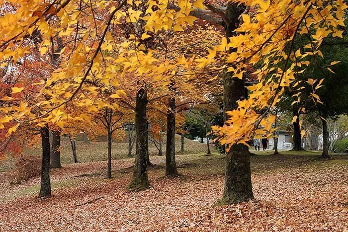 深まる公園の秋1