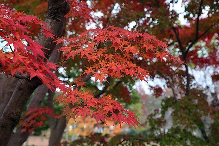 深まる公園の秋3