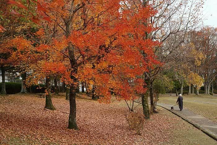深まる公園の秋2