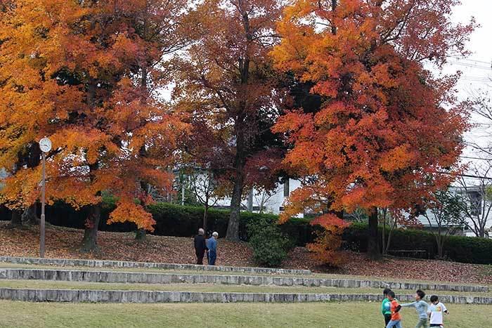 深まる公園の秋4
