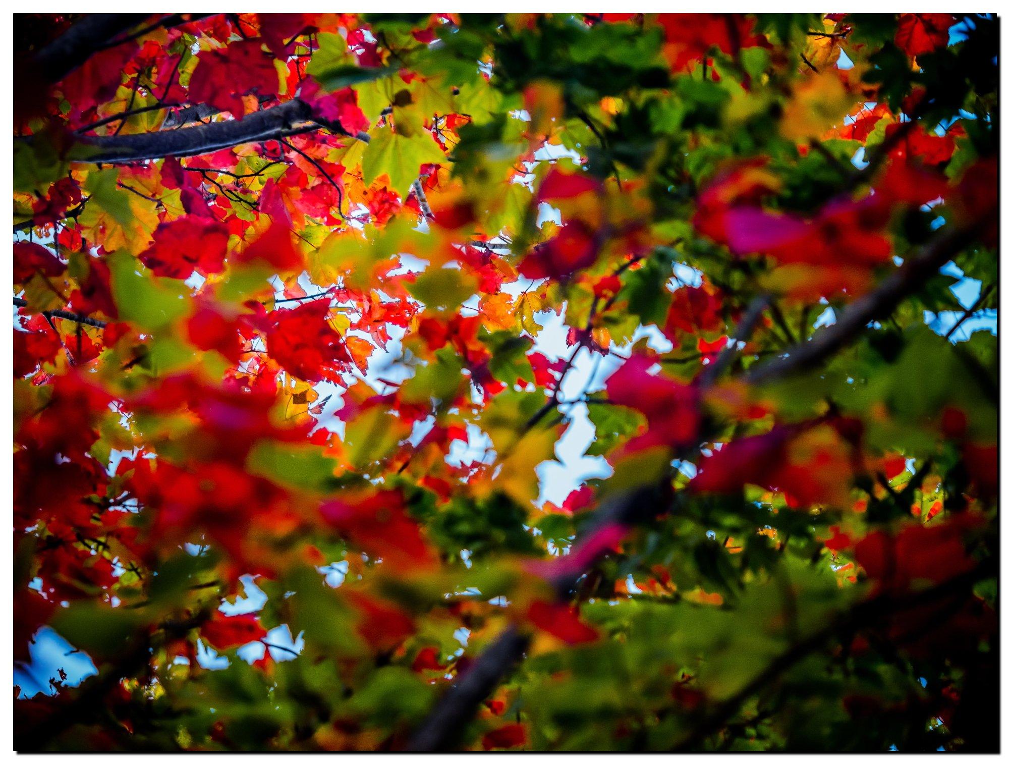 02LR-PF098057-Edit-1OV.jpg