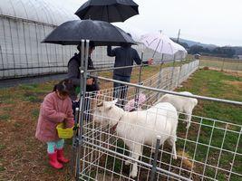 【写真】小雨の中で傘をさしながらアランとポールにエサをあげるご家族の様子