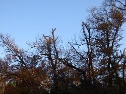 キツツキがいそうな枯木