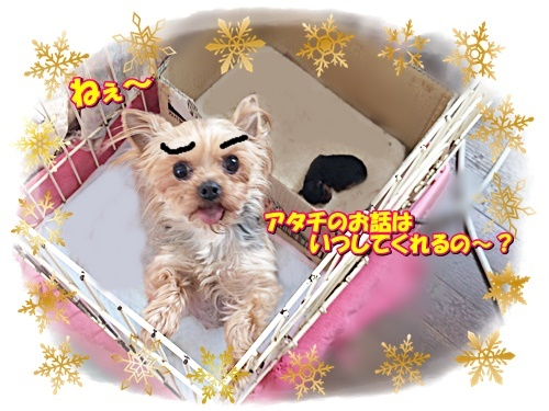 yume_20190228110937b02.jpg