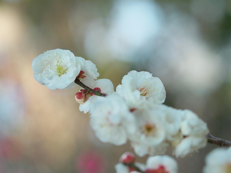 初春のひかり