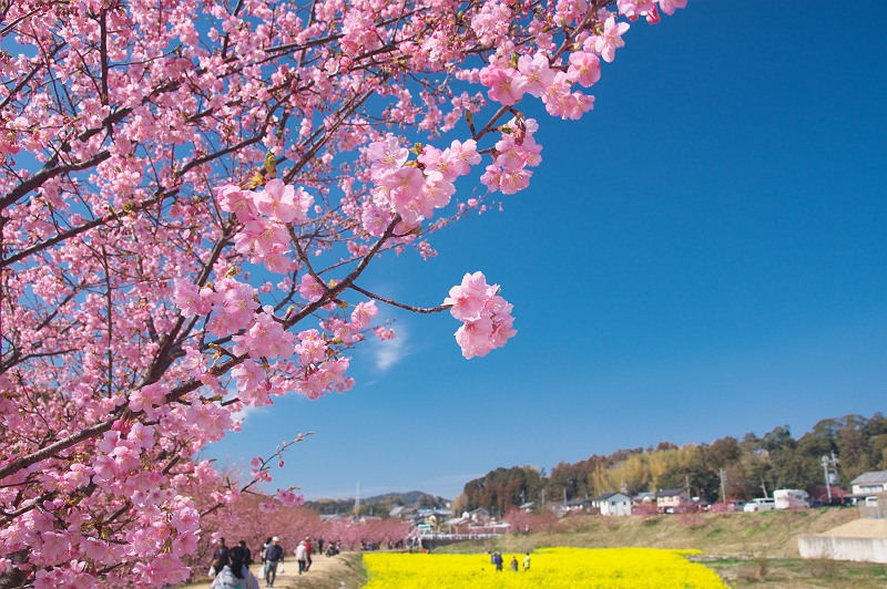 東大山に訪れる春