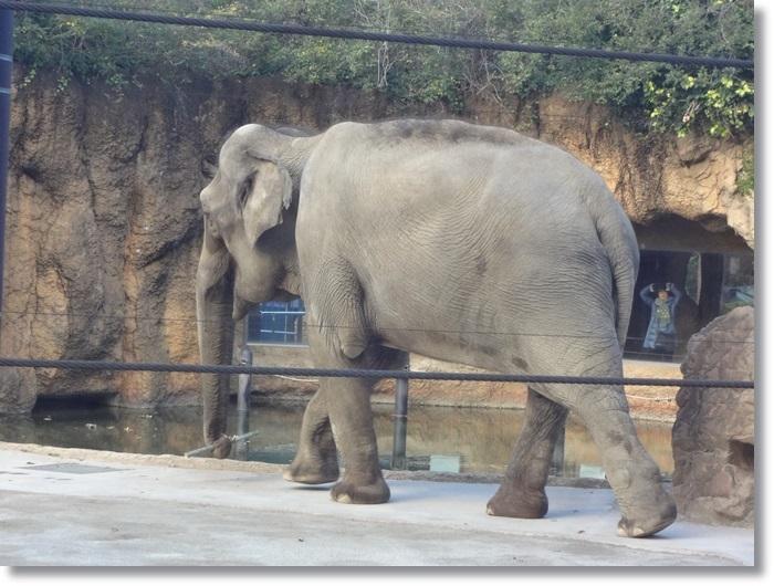 上野動物園DSC02112