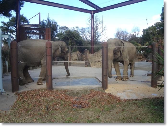 上野動物園DSC02114